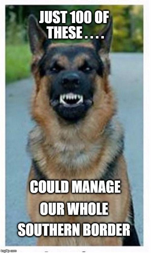 Funny German Shepherd Memes