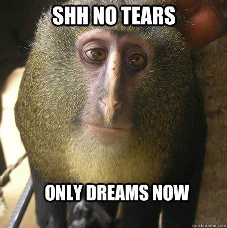 Monkey Memes