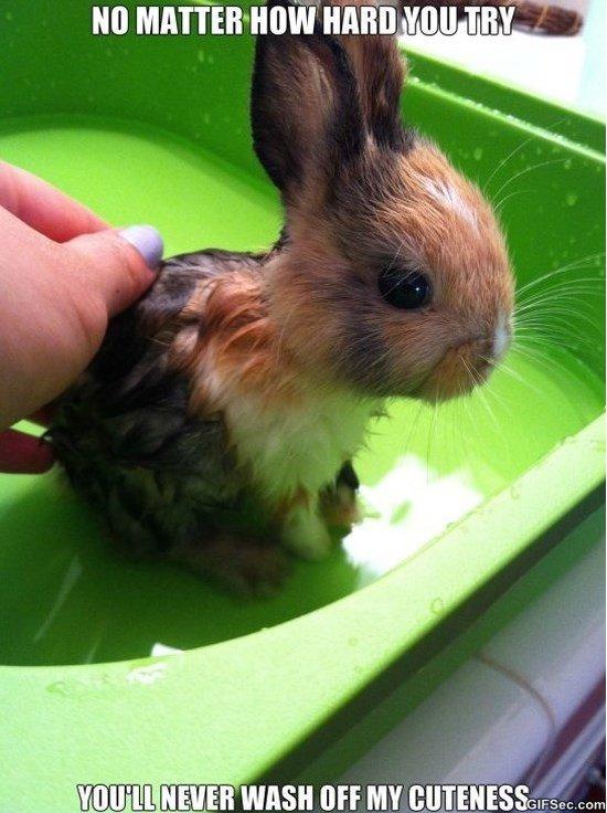 Cute Bunny Memes