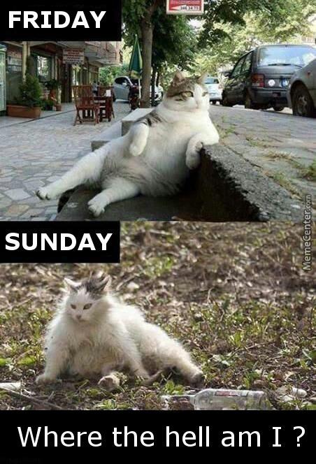 Sunday Funny Memes