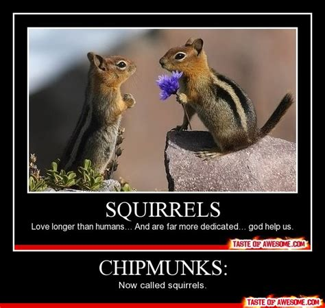 Funny Alvin And The Chipmunks Memes