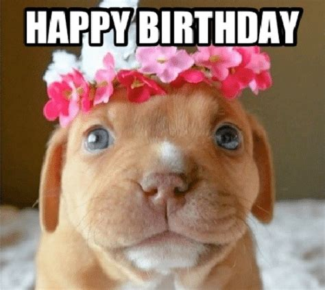 Happy Birthday Cute Dog Heart Touching Wishes For Puppies