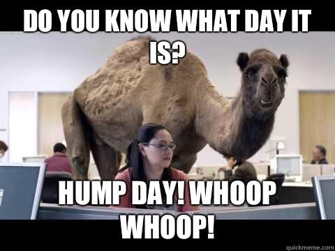Camel Memes