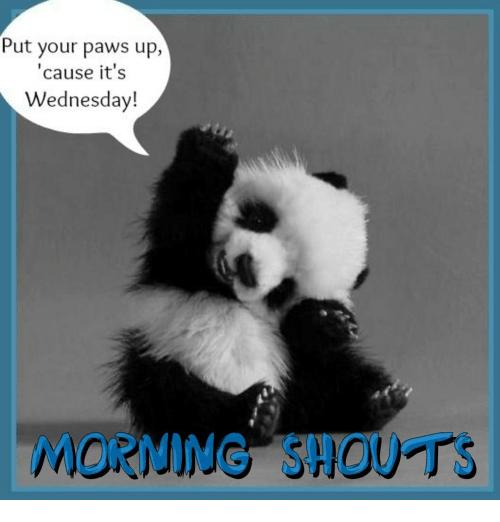 Wednesday morning Memes