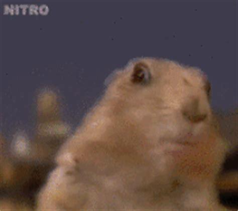 Dramatic hamster Memes