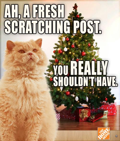 Christmas Memes Cats.Cat Christmas Memes