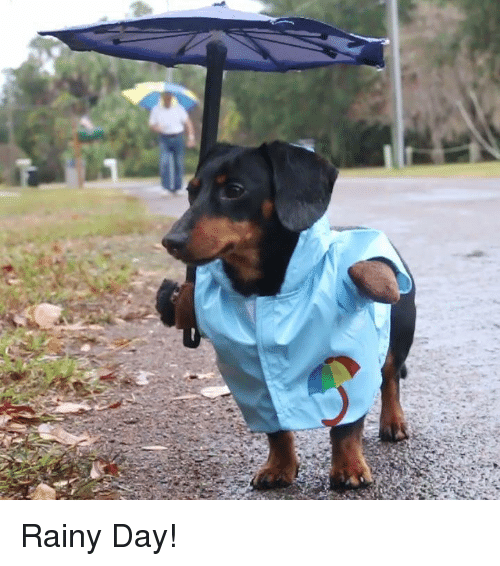 Funny Rainy Day Memes