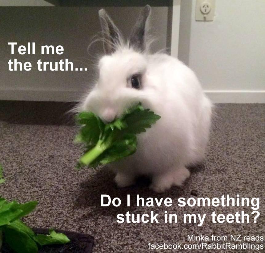 Funny Bunny Memes