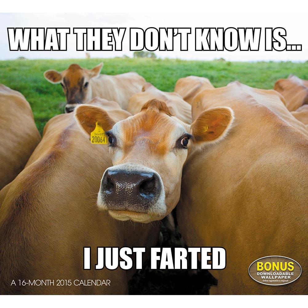 Happy friday animal meme memes