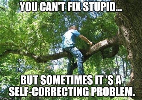 You can t fix stupid Memes