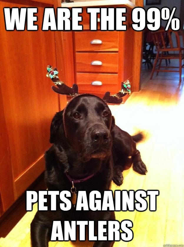 Dog Christmas Meme.Funny Dog Christmas Memes