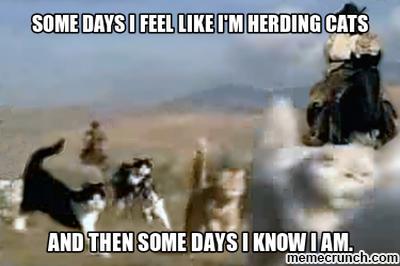 Image result for herding  cowboys meme
