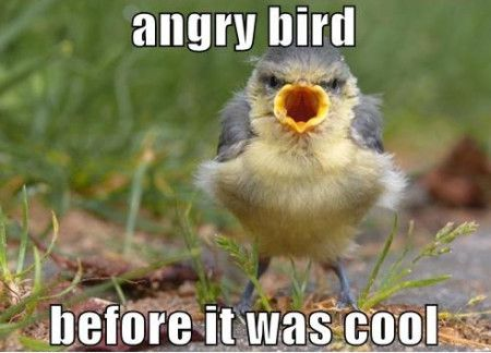 Funny Bird Memes
