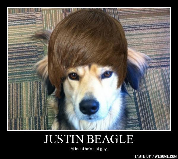 Funny Beagle Memes