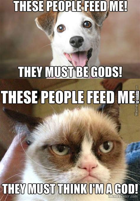 Cat dog Memes