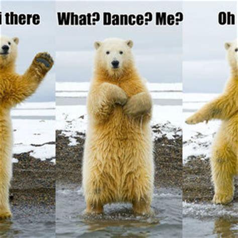 Dancing polar bear Memes
