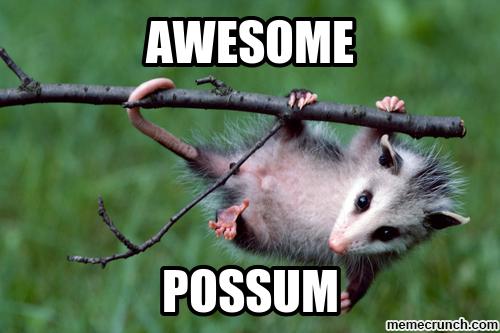 Possum Memes