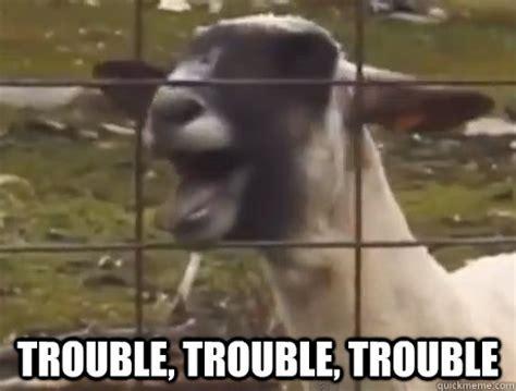 Screaming Goat Memes