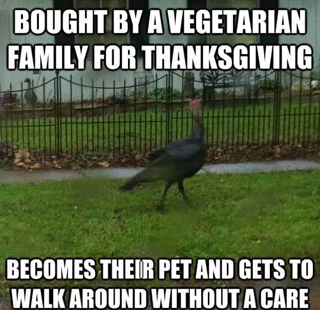 Happy Thanksgiving Funny Memes