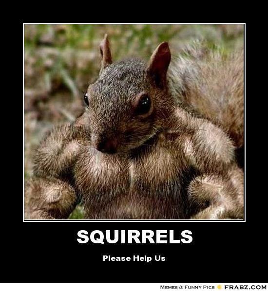 Funny squirrel Memes