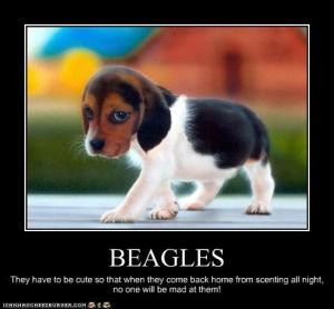 Beagle Memes