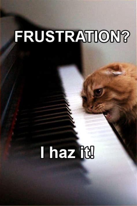 Image result for frustrated cat meme