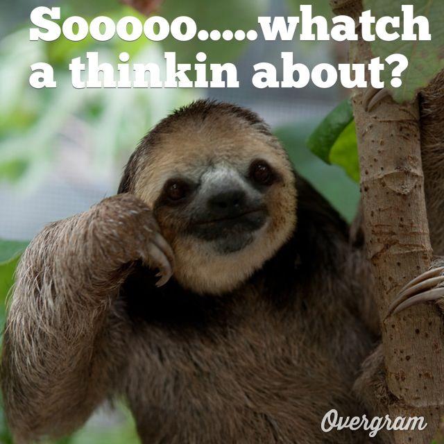 Funny sloth memes - Funny sloth pics ...