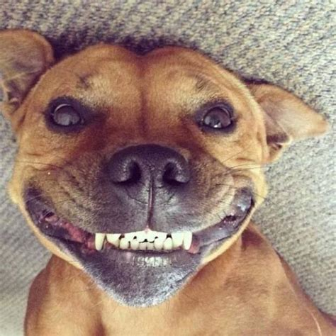 Look at this cute face and ... Smile! - HAPPY KITTEN ...  |Cute Smile Memes