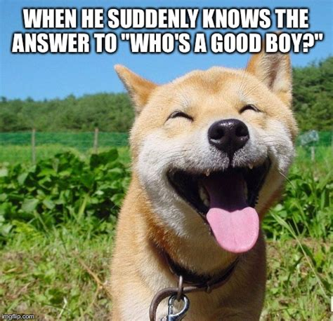 Happy Dog Memes Search the imgflip meme database for popular memes and blank meme templates. happy dog memes