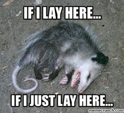 967e614e075ed06aed2a8cc9ca87d285 possum memes