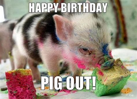 Happy birthday pig Memes