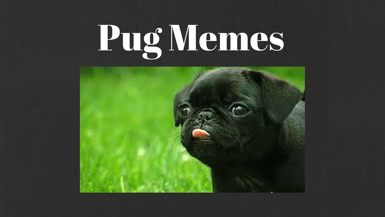 Memes De