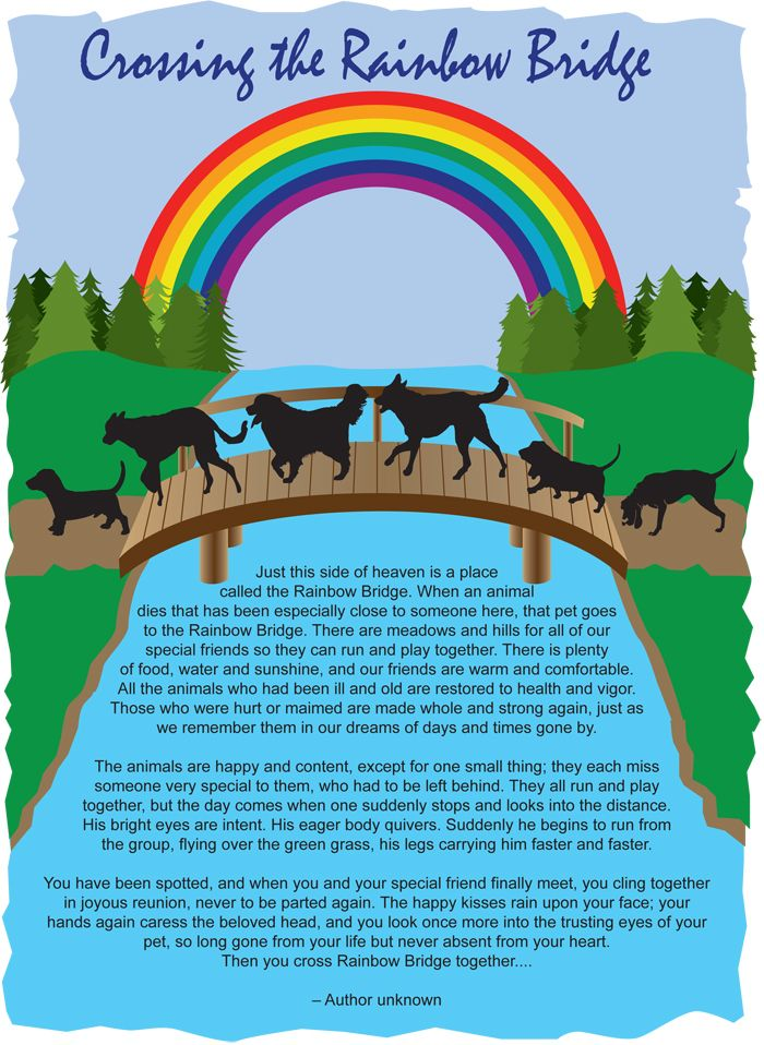 picture relating to Rainbow Bridge Poem for Dogs Printable known as Rainbow bridge Memes