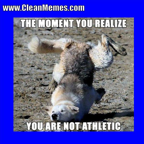 Clean animal Memes