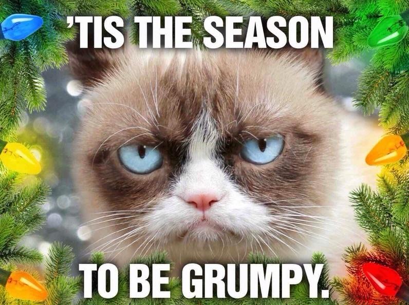 Cat christmas Memes