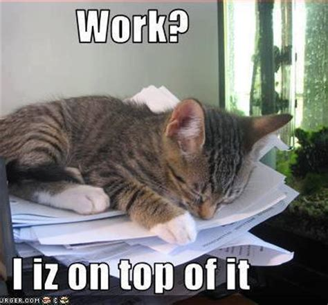 Working cat Memes