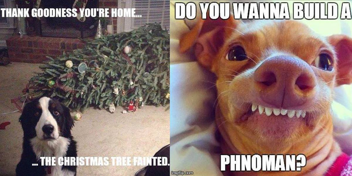 Dog Christmas Tree Meme.Funny Dog Christmas Memes