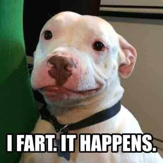 Funny pitbull Memes
