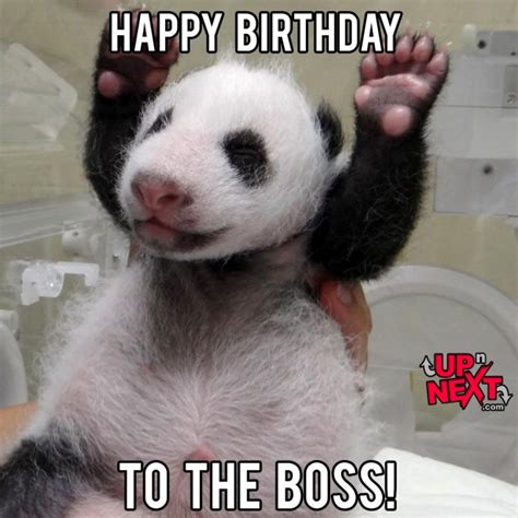 Happy Birthday Lady Memes