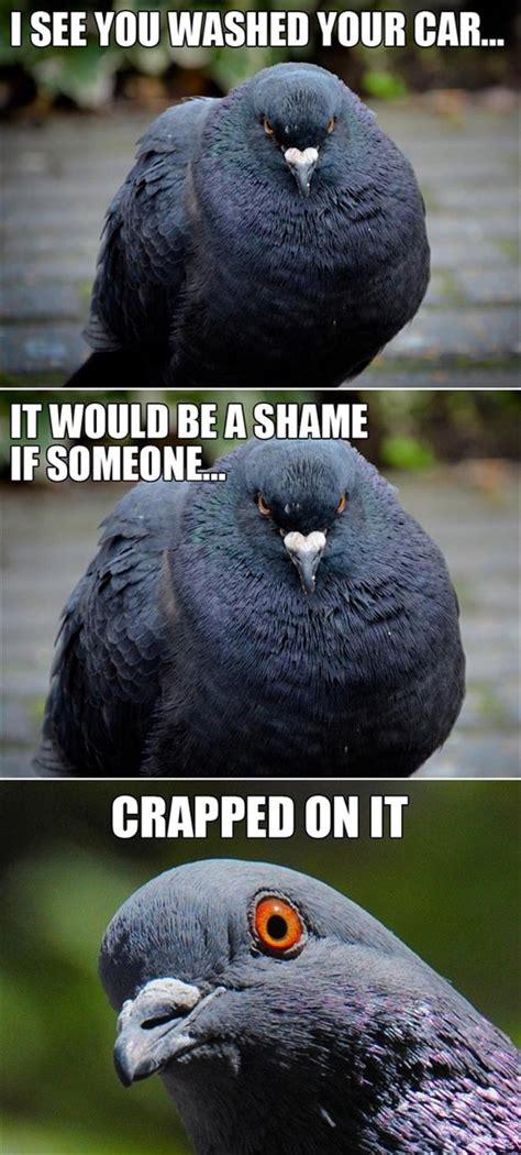 Bird Poop Memes