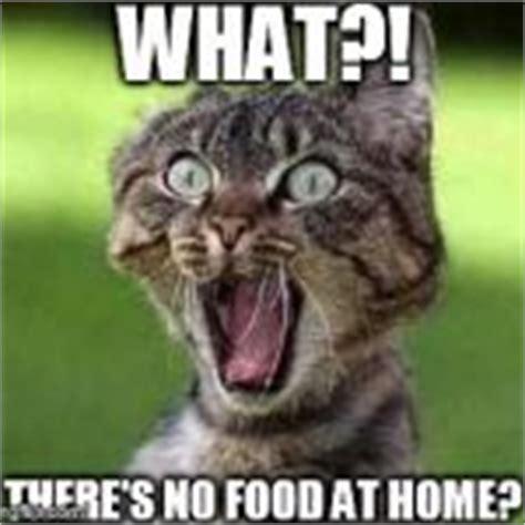 Scared cat Memes