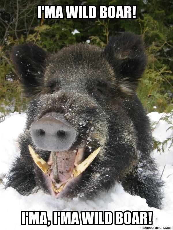 Hog Hunting Memes