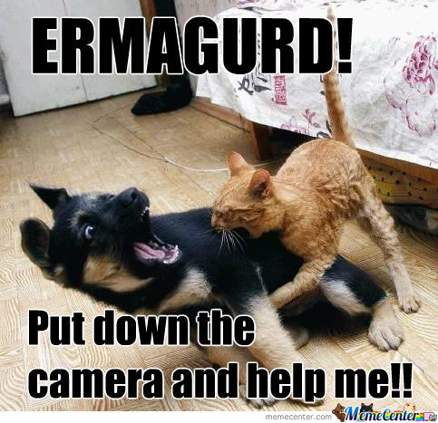 Funny cat vs dog Memes