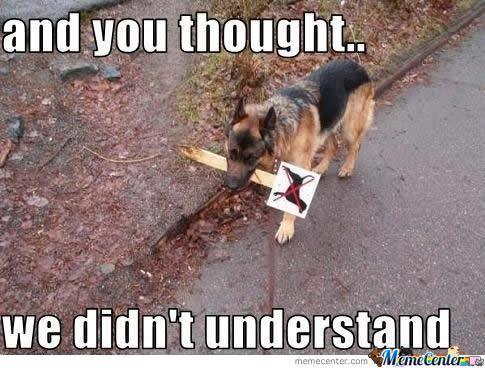 Smart Dog Memes