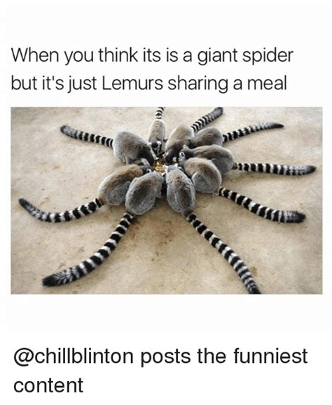 Funny Spider Memes