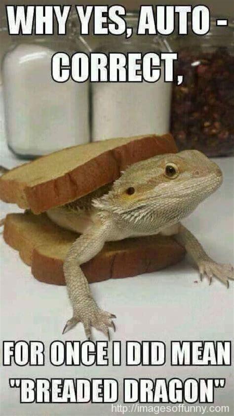 Bearded Dragon Memes