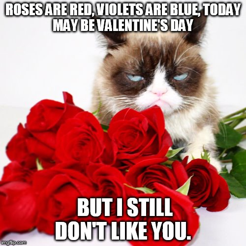 Grumpy Cat Valentines Meme Enam Valentine