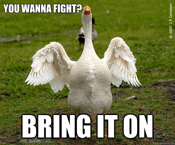 fighting-goose-meme