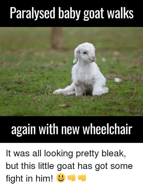 Baby Goat Memes