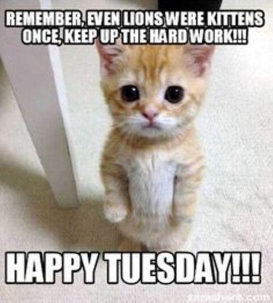 Funny Tuesday Morning Memes